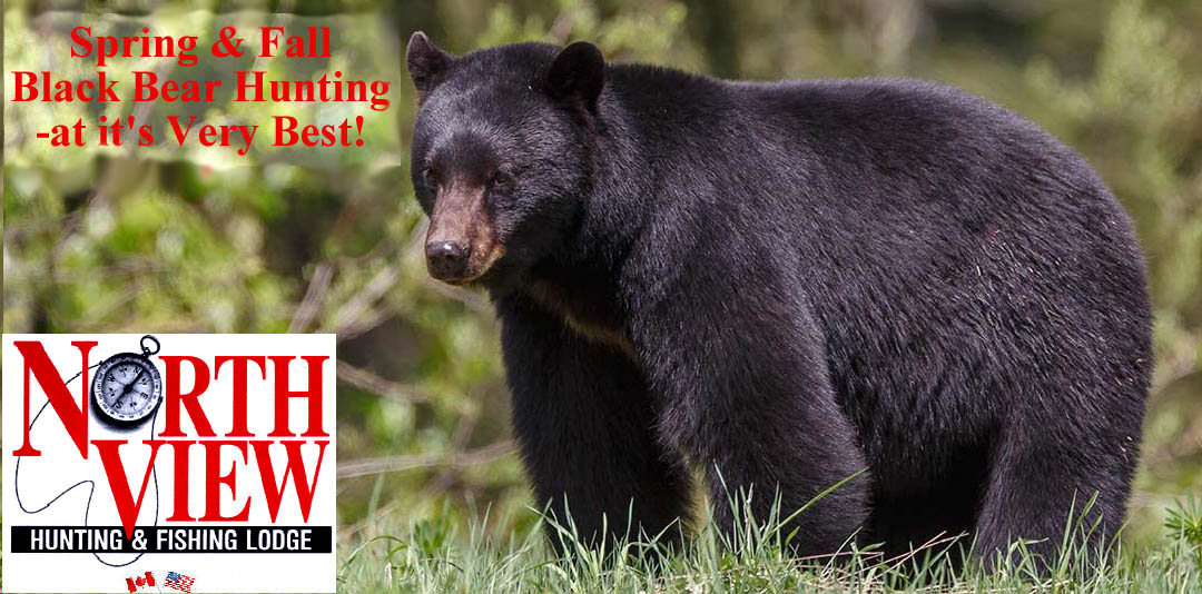 New Brunswick Black Bear, Moose, Deer hunting outfitters and Lodges